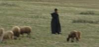 class image- sheep