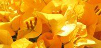 banner- flowers 3 (jg)